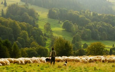 A Shepherd's Look at Psalm 23 – Book Review